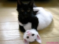 black-vs-white-kitten