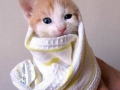 cat-wrapped-up-in-a-towel