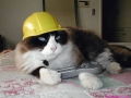 contruction-cat