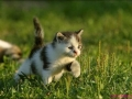 cute-kitten-walking
