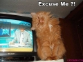 excuseme-cat
