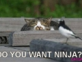 funny-cat-photo016