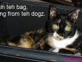 funny-cat-photo037