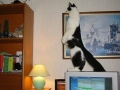 funny-cat-photo092