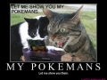 Funny Cat Photo131