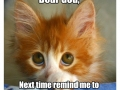 Funny Cat Picture032
