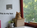 Get Your Own Box