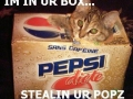 Kittyinpepsibox