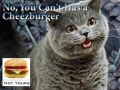 No You Cant Has Cheezburger