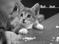 Puzzled Kitty